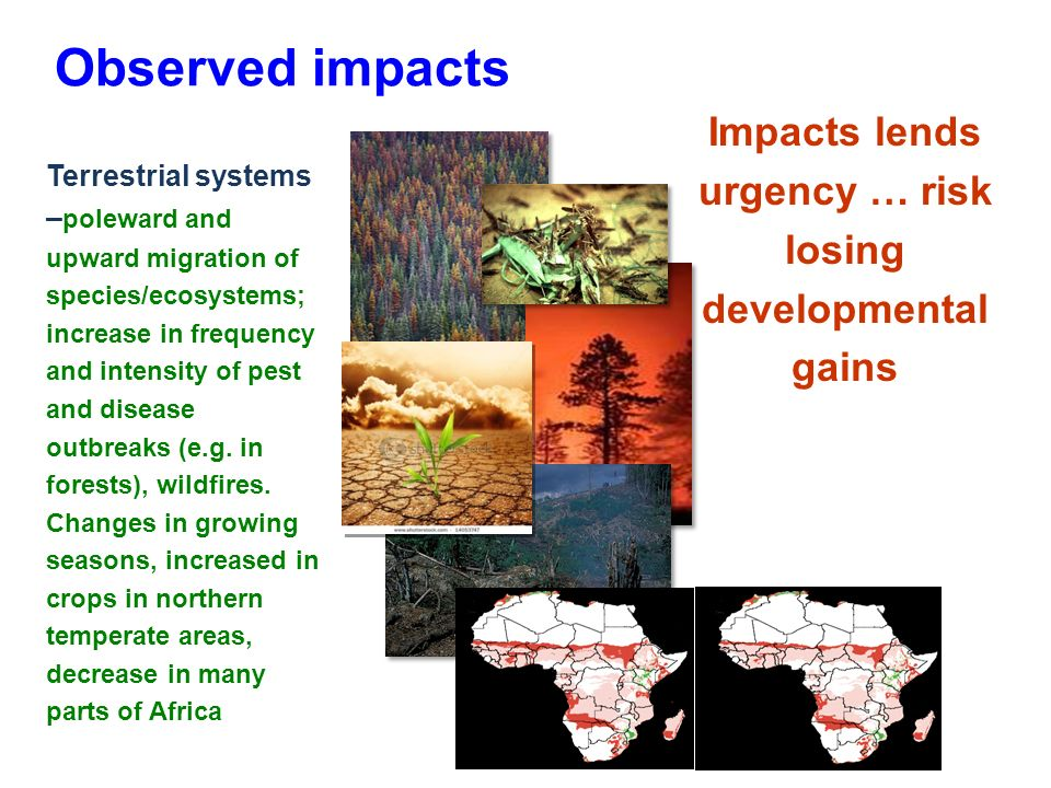 Observed impacts Terrestrial systems – poleward and upward migration of species/ecosystems; increase in frequency and intensity of pest and disease outbreaks (e.g.
