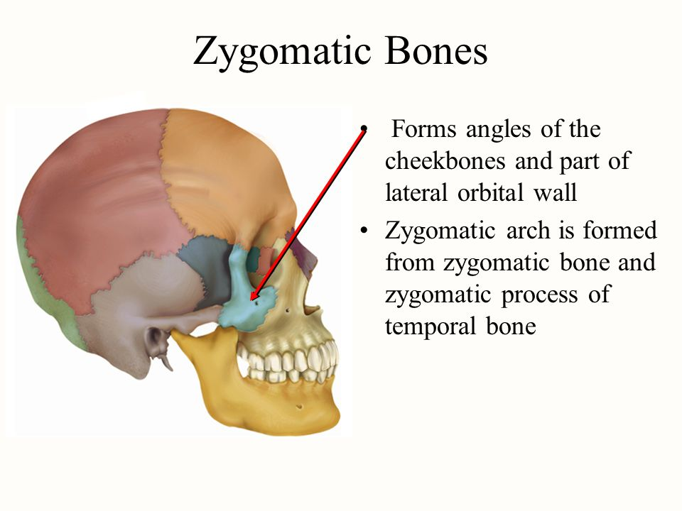 temporal process of the zygomatic bone, Human body