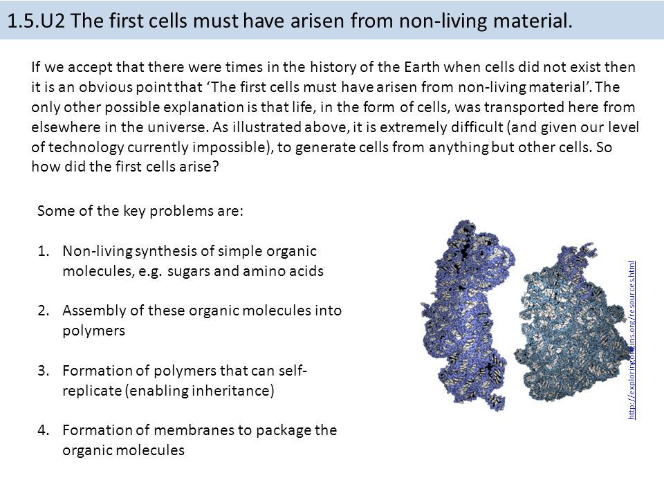 1.5 Origin of cells Essential idea: There is an unbroken chain of ...