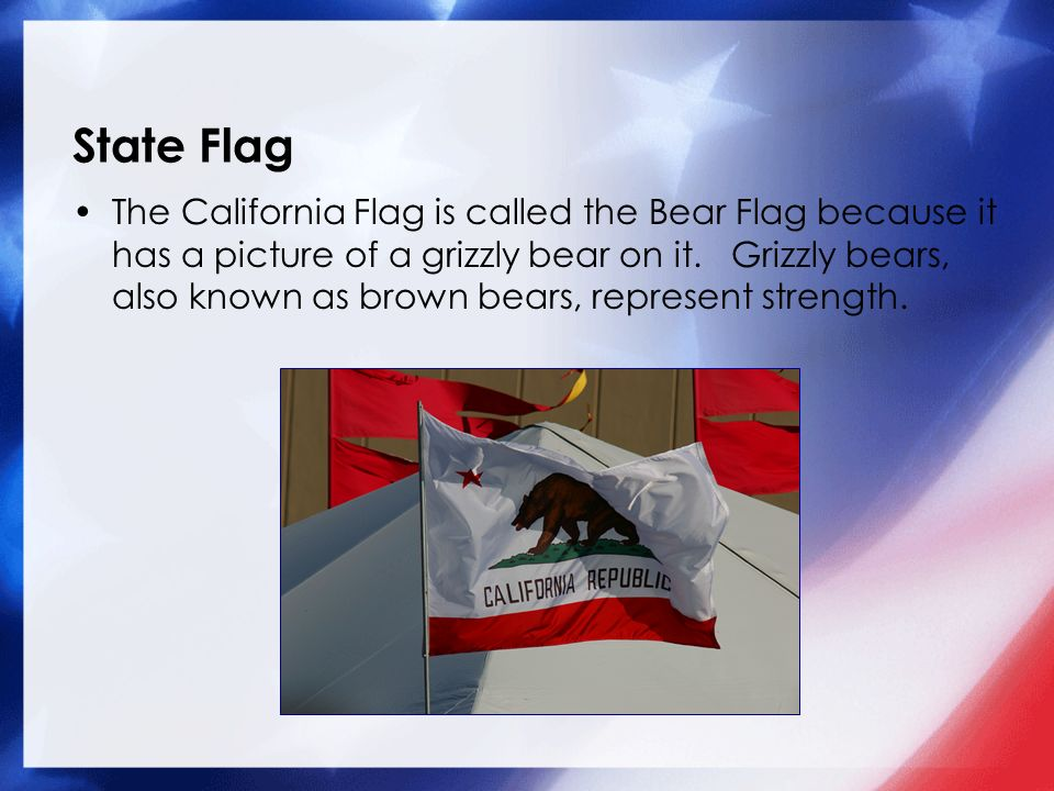 State Flag The California Flag is called the Bear Flag because it has a picture of a grizzly bear on it.