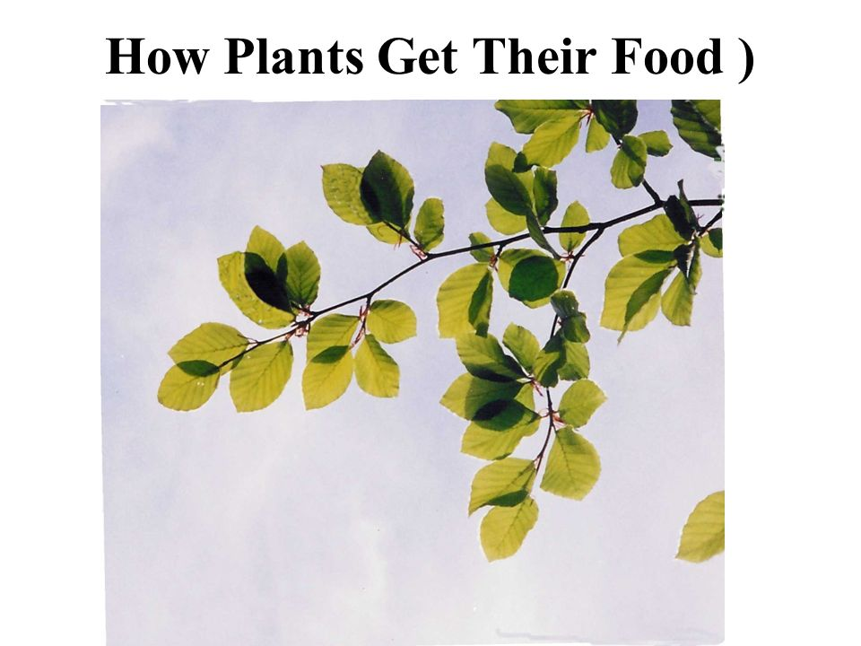 How Plants Get Their Food )