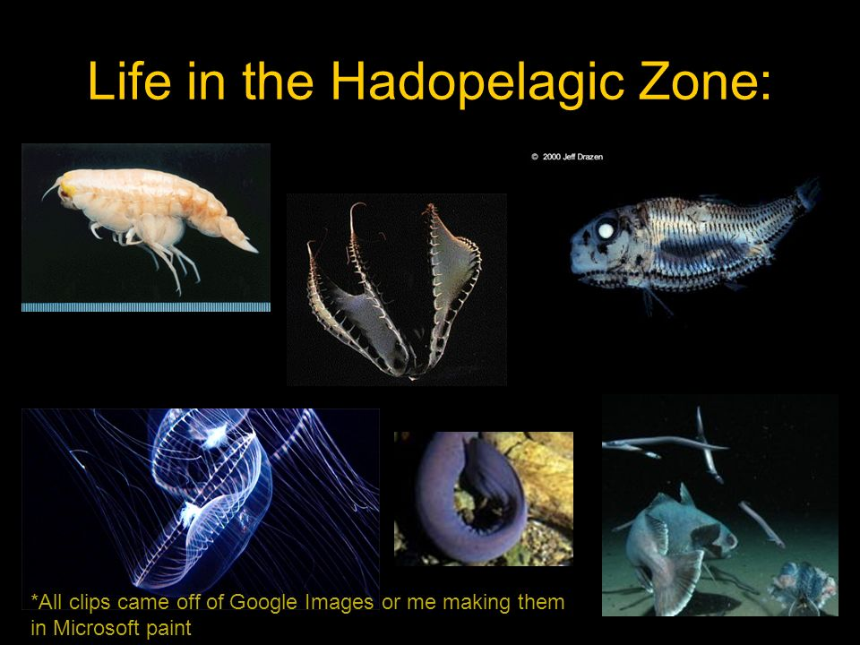 Life in the Hadopelagic Zone: *All clips came off of Google Images or me making them in Microsoft paint