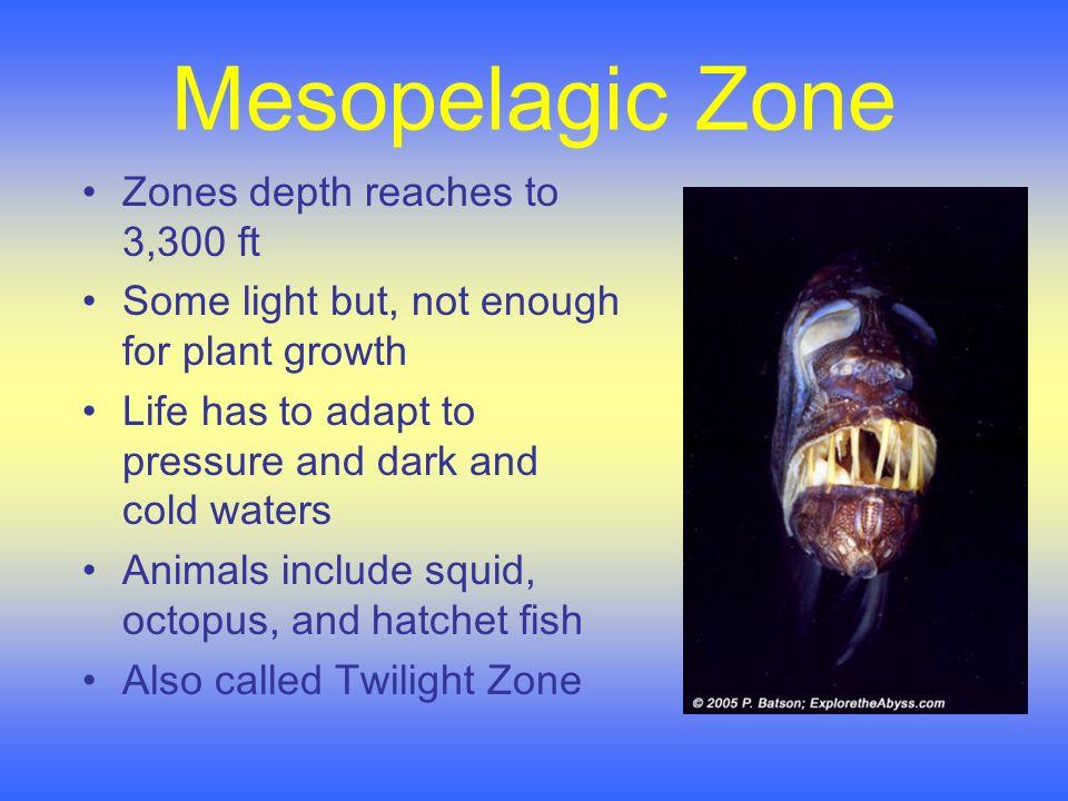 Life in the Mesopelagic: