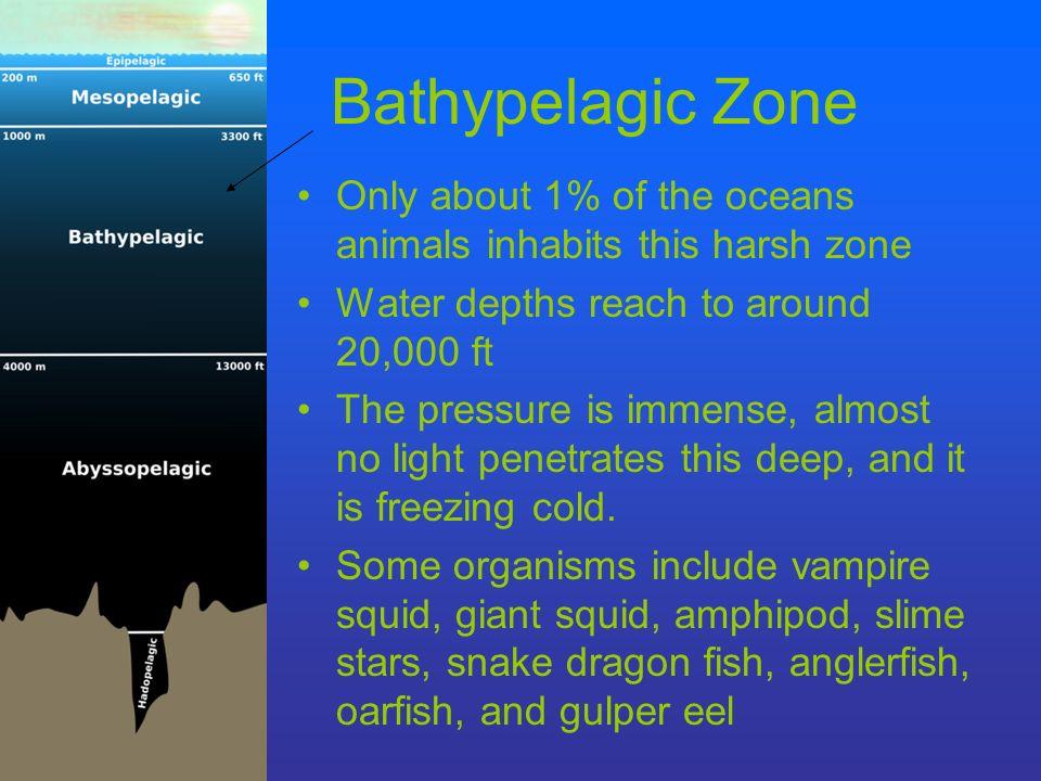 Life in the Bathypelagic Zone: