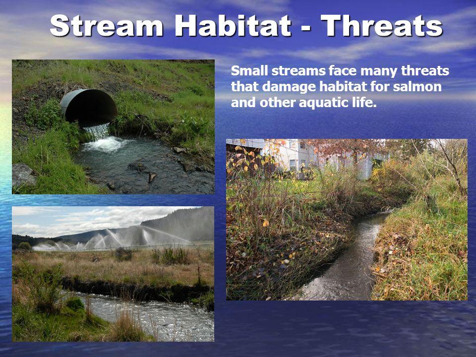 3 stream habitat threats small streams face many threats that damage habitat for salmon and other aquatic life