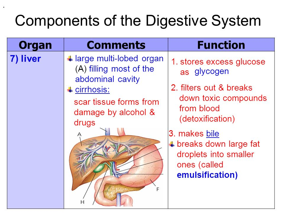 Unit 3: Animal Anatomy & Physiology Components of The Digestive ...