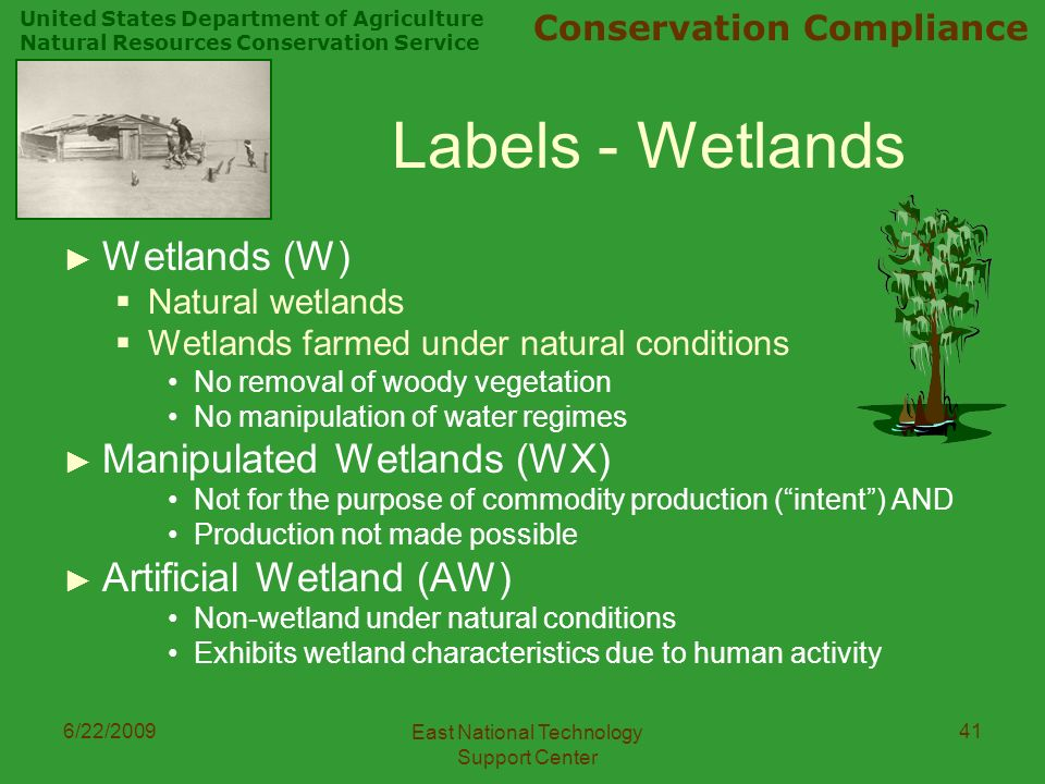 United States Department of Agriculture Natural Resources Conservation Service Conservation Compliance 6/22/2009 East National Technology Support Center 41 Labels - Wetlands ► Wetlands (W)  Natural wetlands  Wetlands farmed under natural conditions No removal of woody vegetation No manipulation of water regimes ► Manipulated Wetlands (WX) Not for the purpose of commodity production ( intent ) AND Production not made possible ► Artificial Wetland (AW) Non-wetland under natural conditions Exhibits wetland characteristics due to human activity