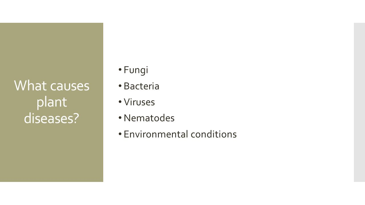 Describe the environmental conditions and adaptations that allow plants....?