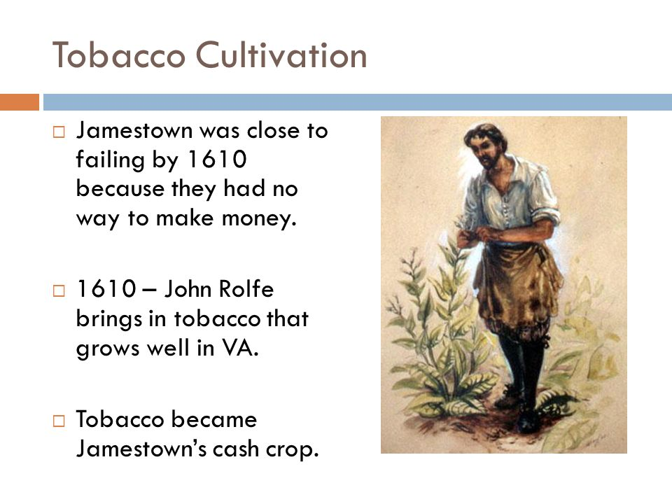 Tobacco Cultivation  Jamestown was close to failing by 1610 because they had no way to make money.