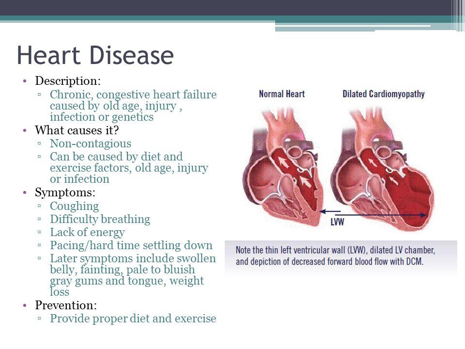 Dog Heart Failure Viagra – Dog Heart Failure Viagra
