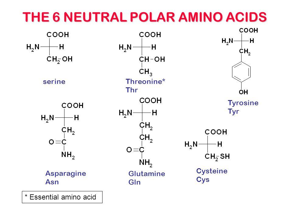 Neutral, polar amino acids