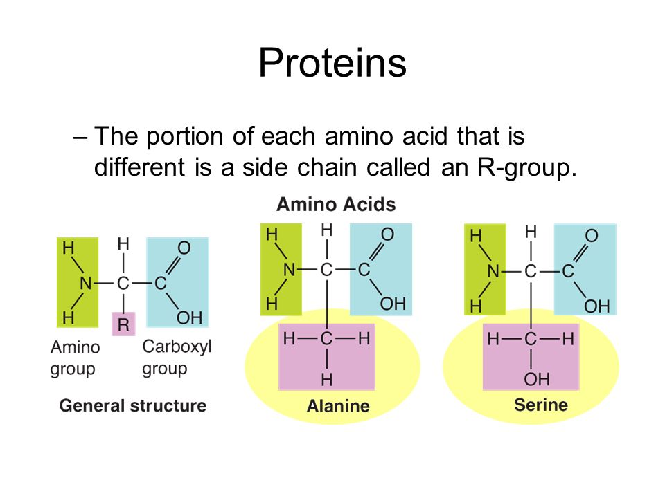 Proteins –The portion of each amino acid that is different is a side chain called an R-group.