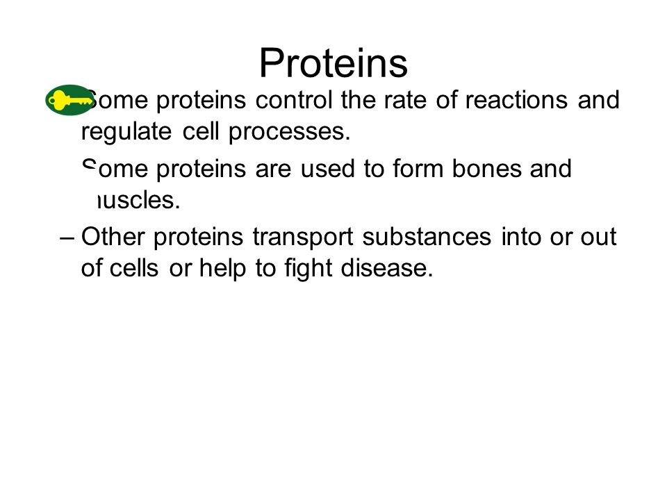 Proteins –Some proteins control the rate of reactions and regulate cell processes.