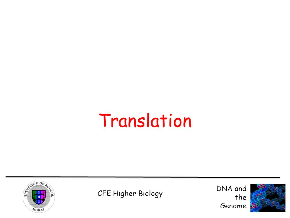 CFE Higher Biology DNA and the Genome Translation