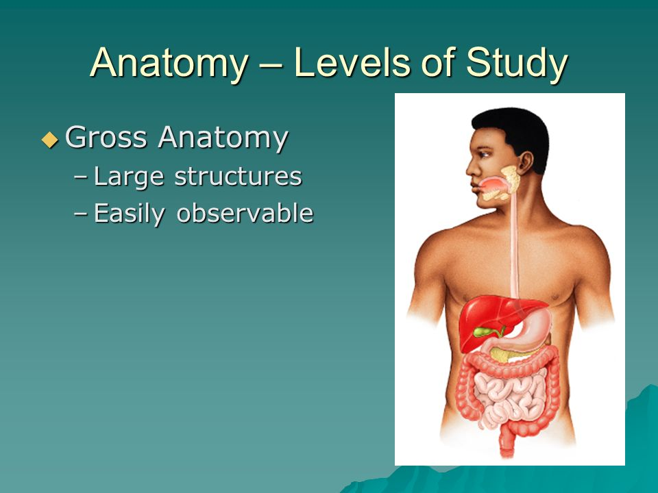 Organization of the Human Body Chapter 1. Learning Goals ...