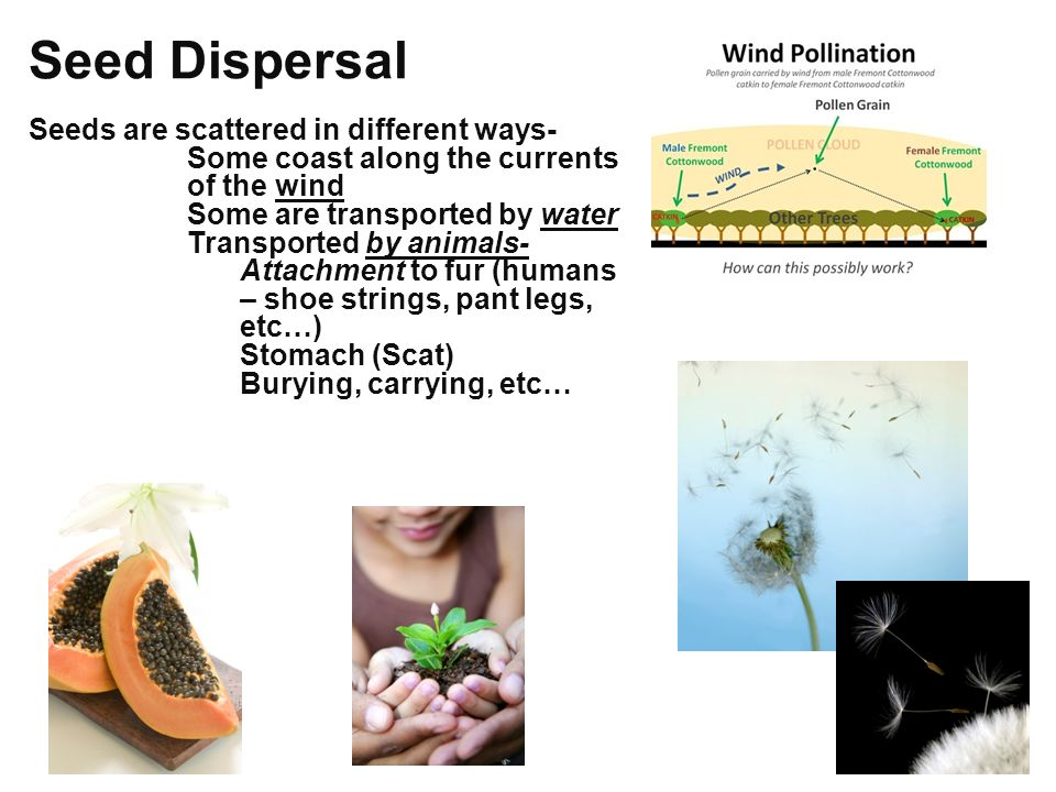 seed dispersal essay