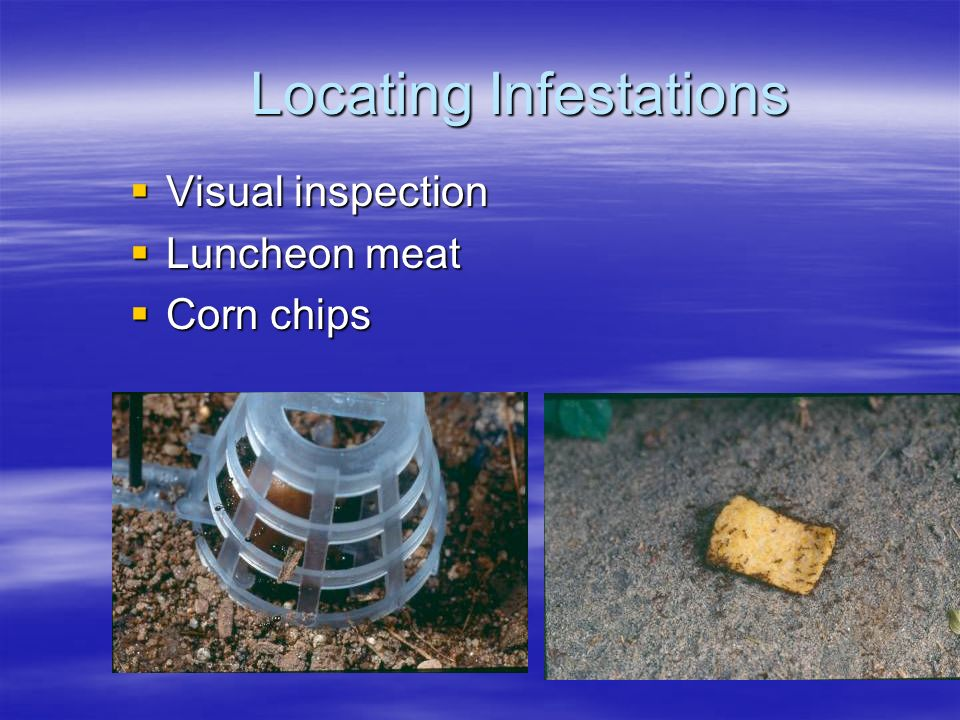 Locating Infestations  Visual inspection  Luncheon meat  Corn chips