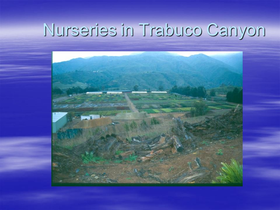 Nurseries in Trabuco Canyon
