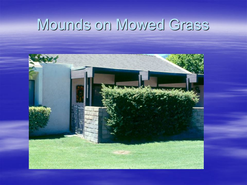 Mounds on Mowed Grass