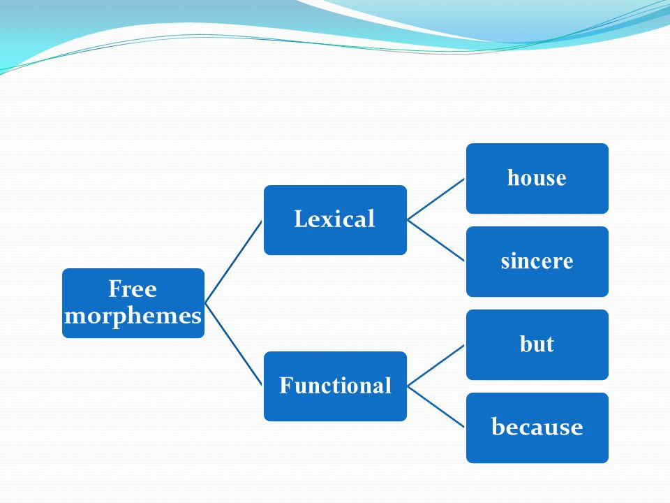 Free morphemes Lexical housesincereFunctionalbut because