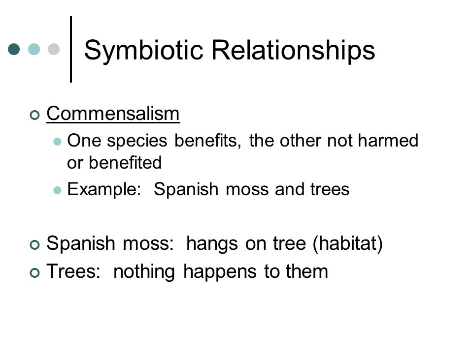 Symbiotic Relationships Commensalism One species benefits, the other not harmed or benefited Example: Spanish moss and trees Spanish moss: hangs on tree (habitat) Trees: nothing happens to them