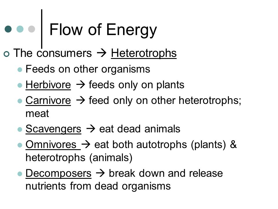 Flow of Energy The consumers  Heterotrophs Feeds on other organisms Herbivore  feeds only on plants Carnivore  feed only on other heterotrophs; meat Scavengers  eat dead animals Omnivores  eat both autotrophs (plants) & heterotrophs (animals) Decomposers  break down and release nutrients from dead organisms