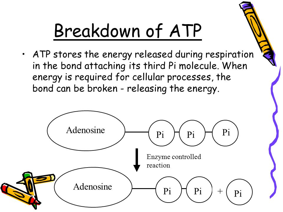 discuss the role of atp in What is photosynthesis photosynthesis is a biological process by which energy contained within light is converted into chemical energy of bonds between atoms that power processes within cells.