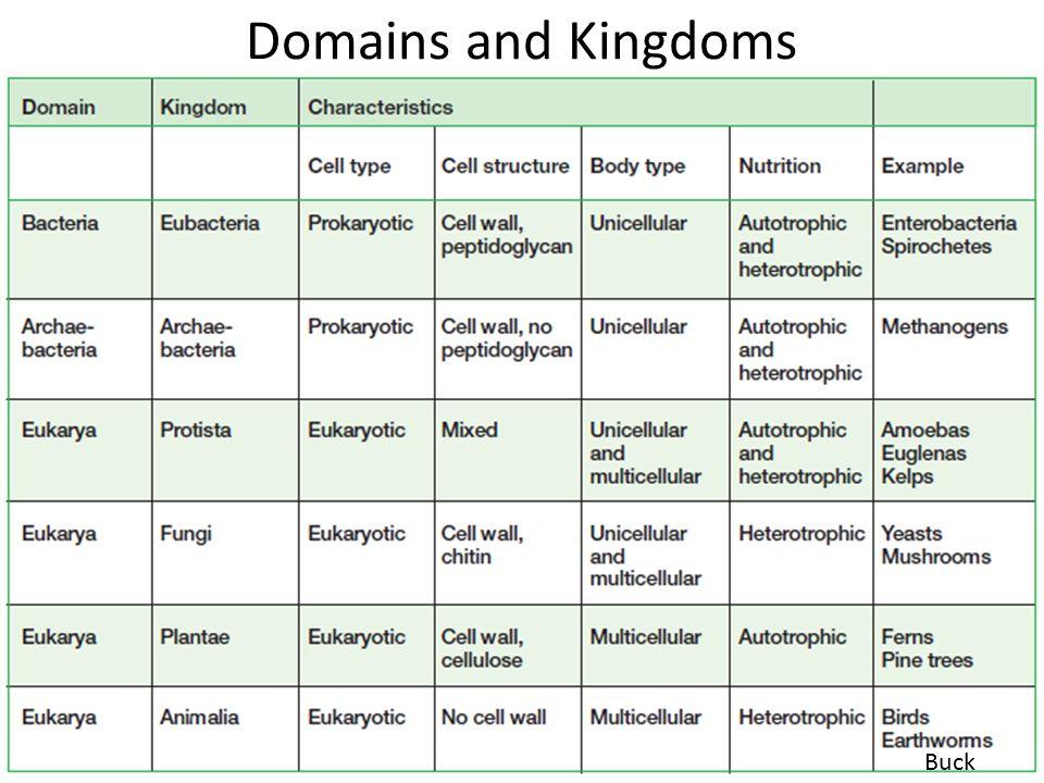 6 kingdoms worksheet