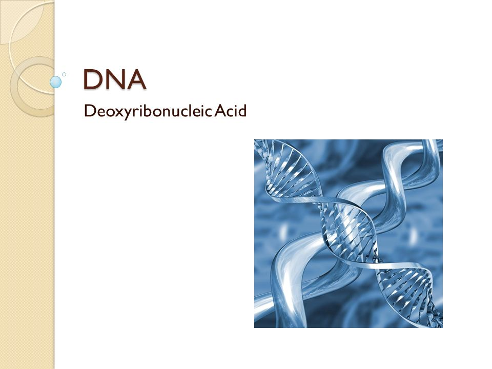 Dna deoxyribonucleic acid what are the building blocks of dna dna 1 dna deoxyribonucleic acid malvernweather Images