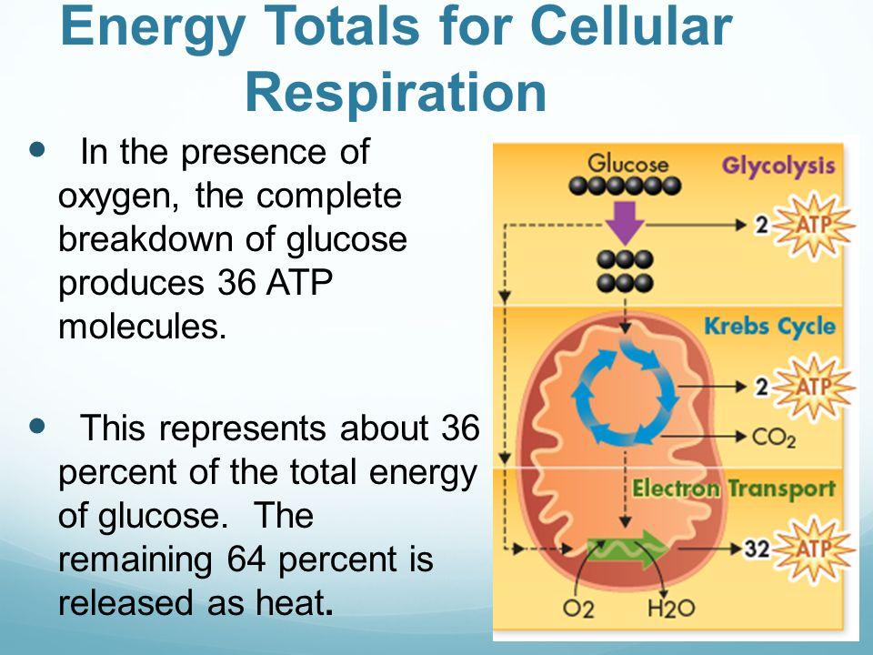 Cell Processes Energy Worksheet - Worksheets