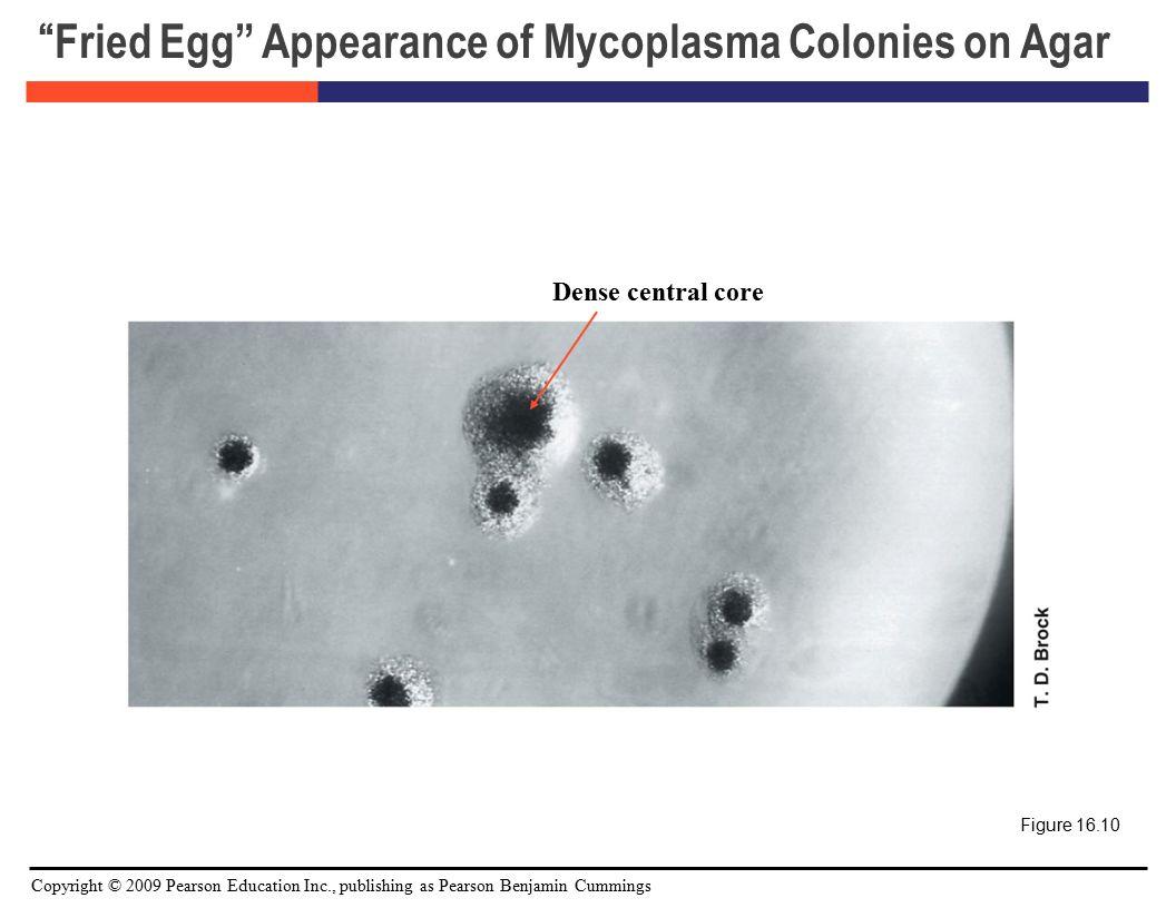 appearance of colonies microorganism essay