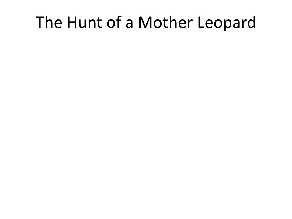 The Hunt of a Mother Leopard