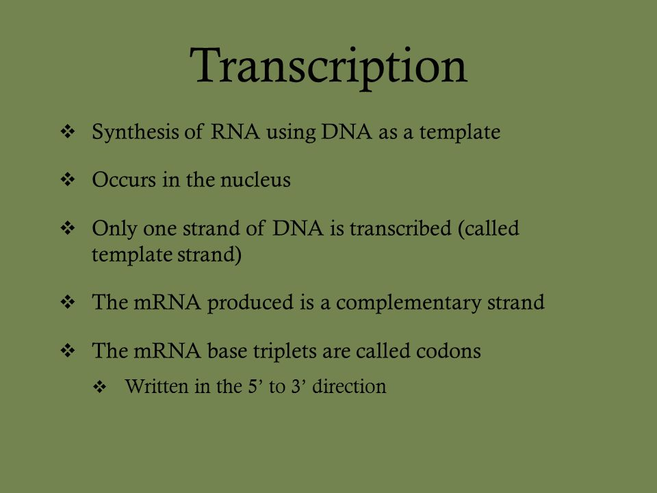 Chapter 17 from gene to protein ppt video online download 5 transcription synthesis of rna using dna as a template occurs in the nucleus only one strand of dna is transcribed called template strand the mrna pronofoot35fo Choice Image