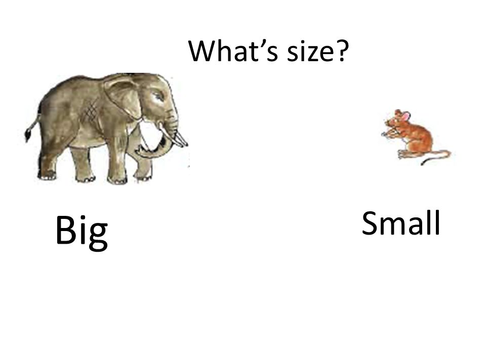 What's size Big Small