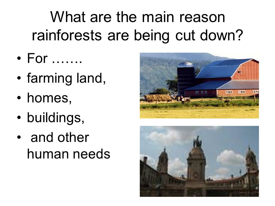 What are the main reason rainforests are being cut down.