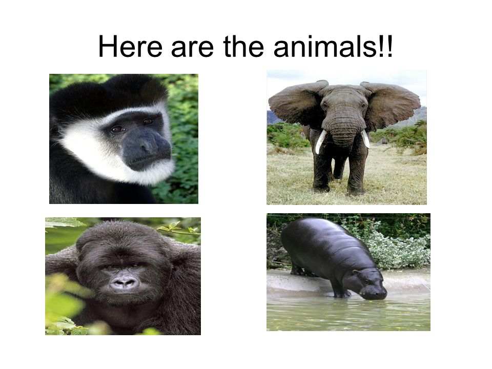 Here are the animals!!