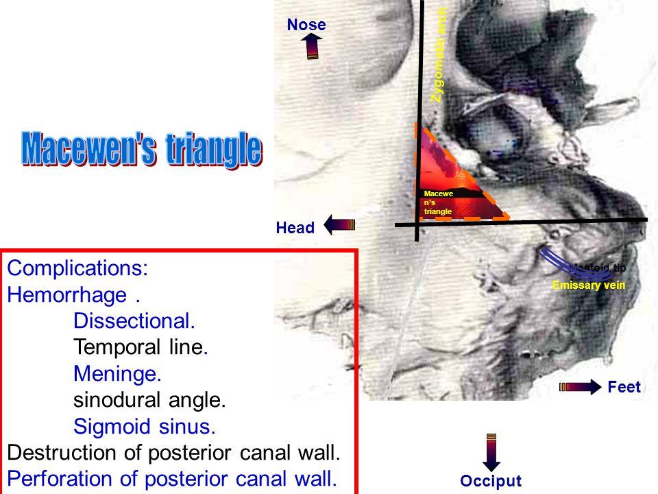 Hermaphrodite anatomy pictures
