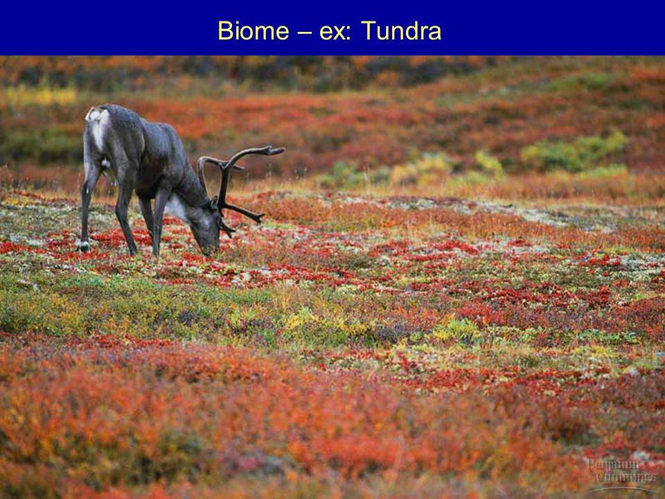 Biome – ex: Tundra