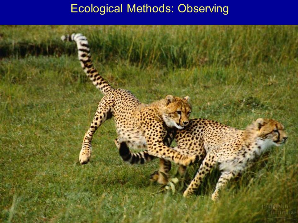 Ecological Methods: Observing