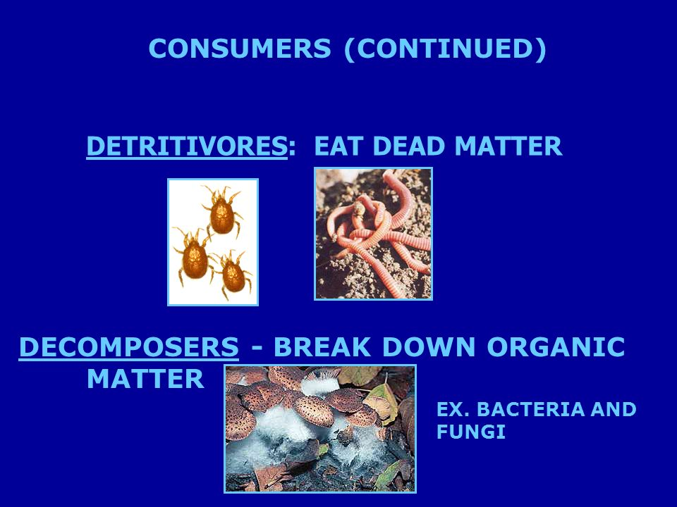 DETRITIVORES: EAT DEAD MATTER DECOMPOSERS - BREAK DOWN ORGANIC MATTER EX.