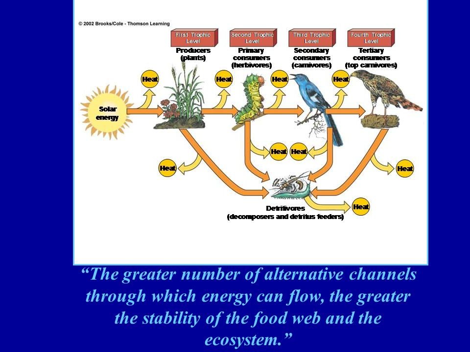 The greater number of alternative channels through which energy can flow, the greater the stability of the food web and the ecosystem.