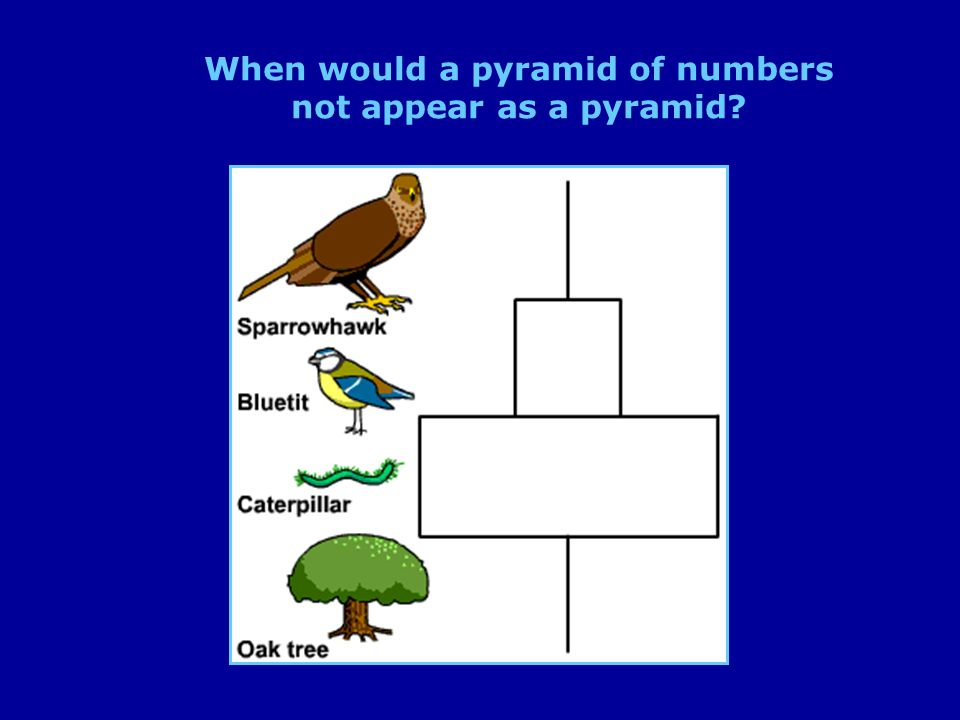 When would a pyramid of numbers not appear as a pyramid