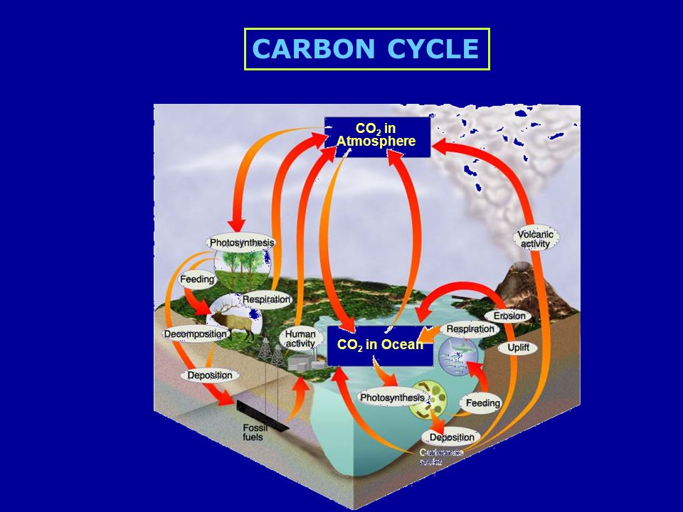 CO 2 in Atmosphere CO 2 in Ocean CARBON CYCLE