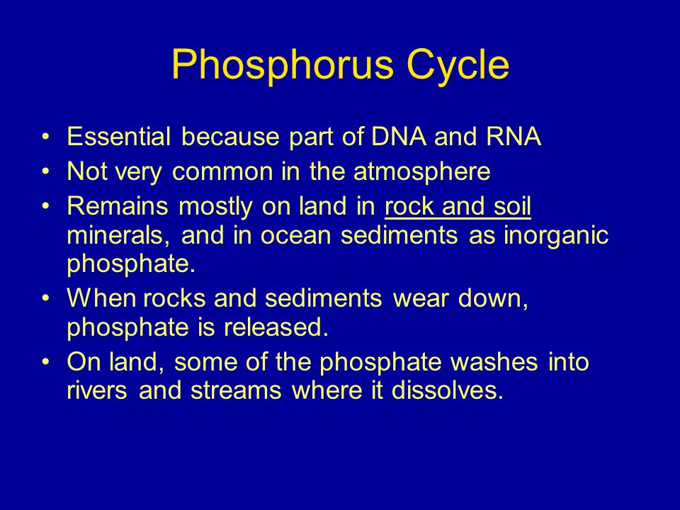 Phosphorus Cycle Essential because part of DNA and RNA Not very common in the atmosphere Remains mostly on land in rock and soil minerals, and in ocean sediments as inorganic phosphate.
