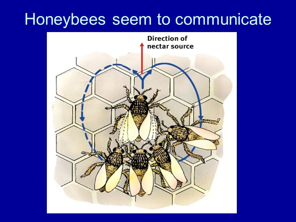 Honeybees seem to communicate