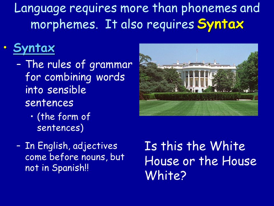 Syntax Language requires more than phonemes and morphemes.