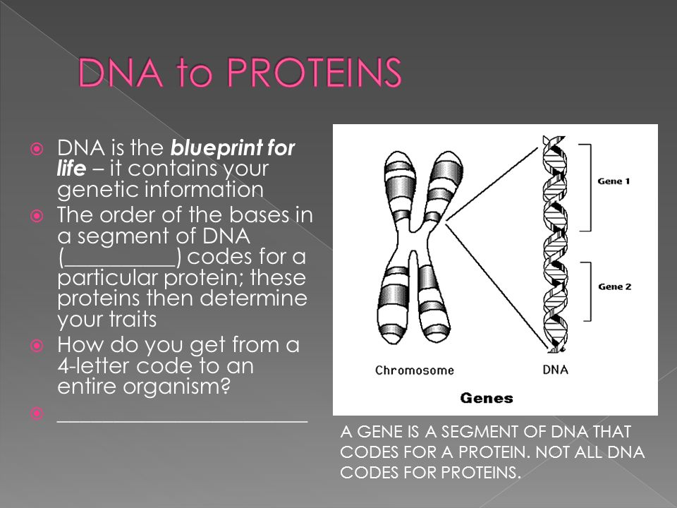 Dna is the blueprint for life it contains your genetic dna is the blueprint for life it contains your genetic information the order malvernweather Choice Image