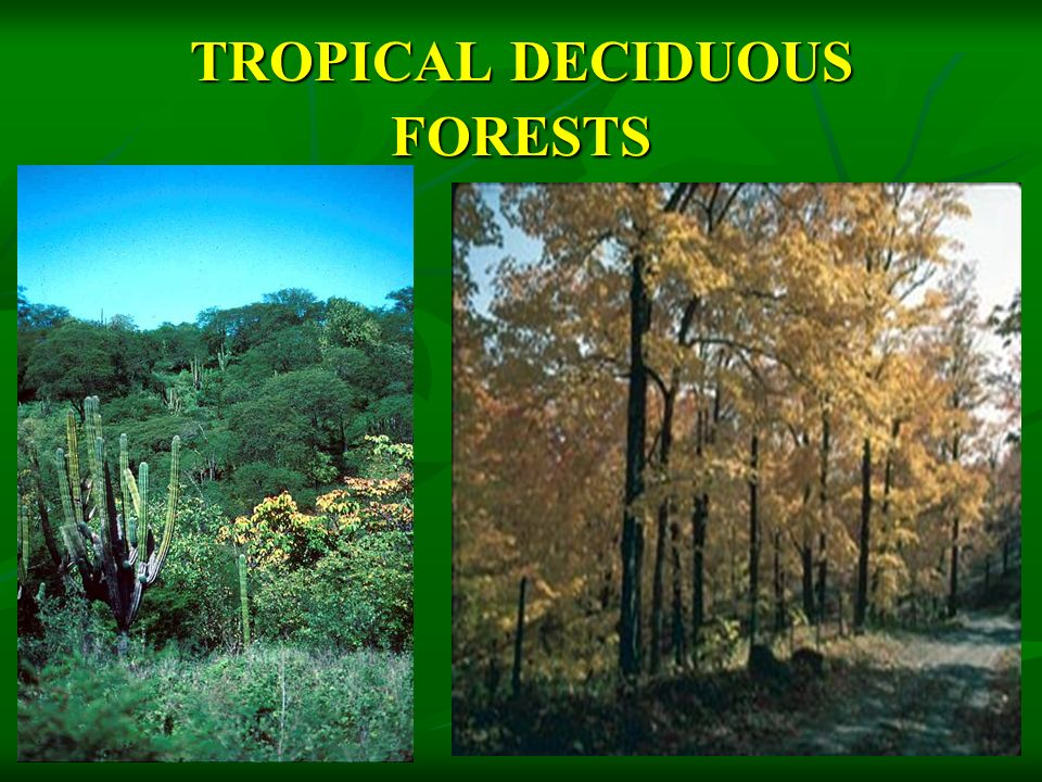 TROPICAL EVER GREEN FORESTS