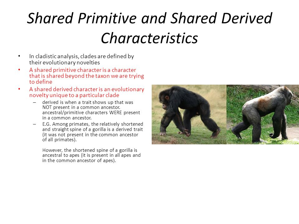 Shared Primitive and Shared Derived Characteristics In cladistic analysis, clades are defined by their evolutionary novelties A shared primitive character is a character that is shared beyond the taxon we are trying to define A shared derived character is an evolutionary novelty unique to a particular clade – derived is when a trait shows up that was NOT present in a common ancestor.