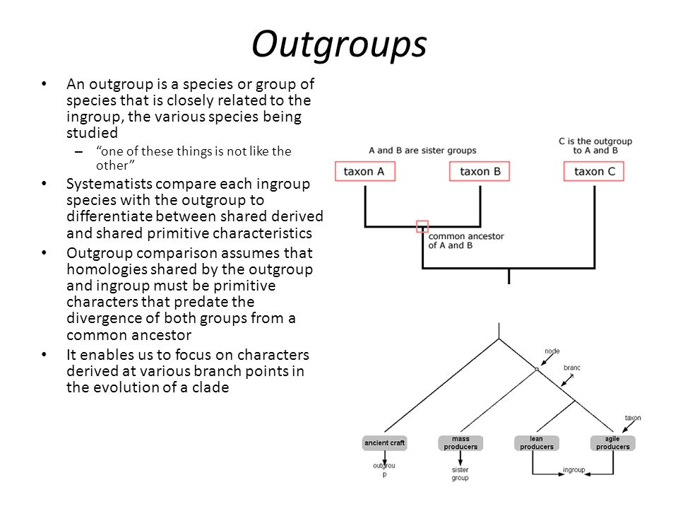 Outgroups An outgroup is a species or group of species that is closely related to the ingroup, the various species being studied – one of these things is not like the other Systematists compare each ingroup species with the outgroup to differentiate between shared derived and shared primitive characteristics Outgroup comparison assumes that homologies shared by the outgroup and ingroup must be primitive characters that predate the divergence of both groups from a common ancestor It enables us to focus on characters derived at various branch points in the evolution of a clade